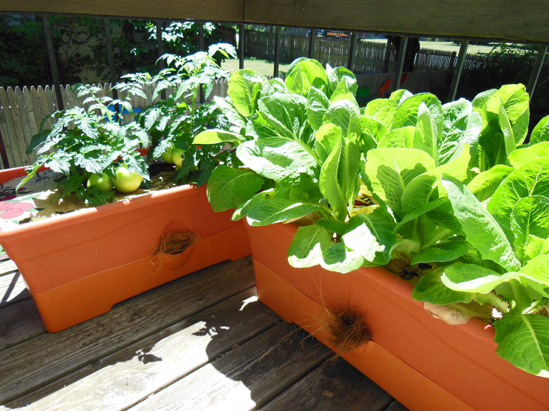 Za različite biljke uzmite odgovarajuće saksije.