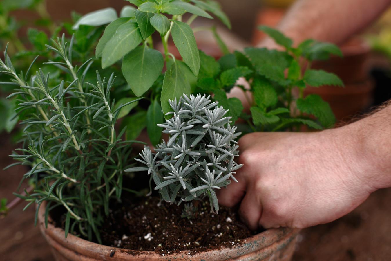 Zasadite pored mirisnih cvjetnica i druge mirisne biljke, bosiljak, ruzmarin, majčinu dušicu.