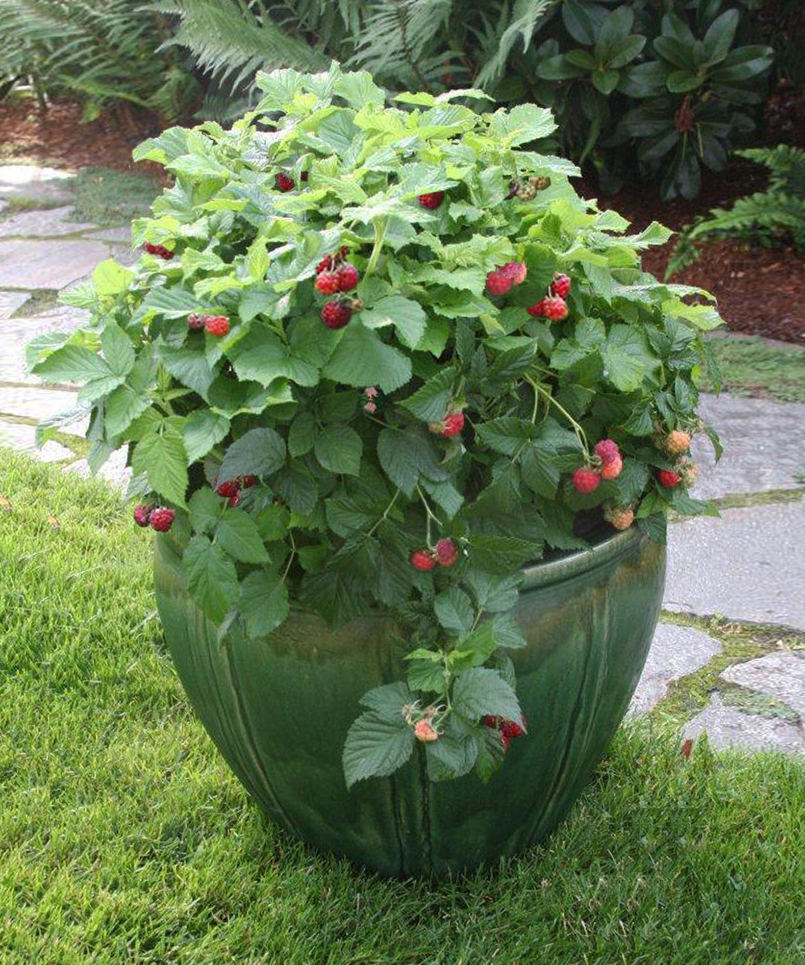Zasadite i povrće ili čak jagodičasto voće kao što su maline.