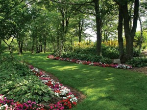 Impatiens je cvijeće idealno za hlad.