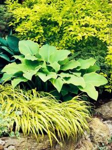 Zasadite biljke svijetlog lišća.