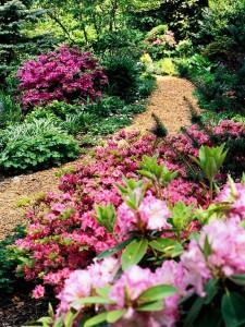 Azaleje, rododendroni će učiniti da vaš vrt bude lijep i u proljeće ali i zimi.