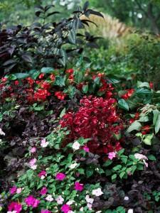 Danas postoji veliki broj vrsta sezonskog cvijeća koje cvjeta na sjenovitim mjestima.