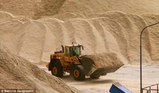 Skoro 200 000 kubnih metara piljevine se proizvede svaki dan. Koliko je to stabala?