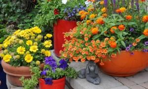 Najčešće greške prilikom uređenja vrta  Uredite Dom