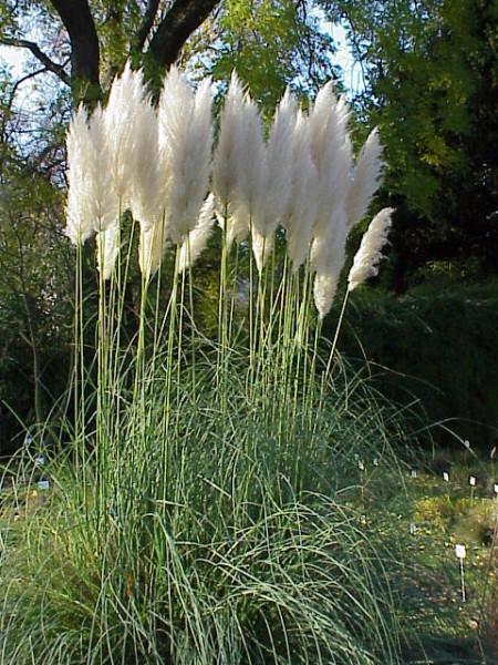 3 vrste cvijeća koje će obogatiti vaš vrt ove jeseni  Uredite Dom