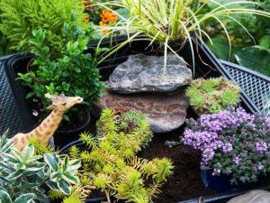 Rasporedite biljke