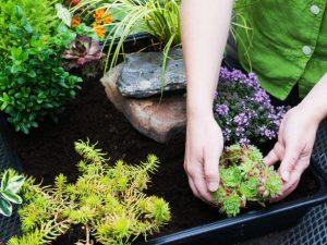 Posadite biljke