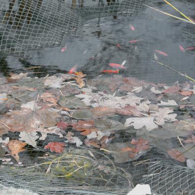 Kako pripremiti vrtno jezerce za zimu?  Uredite Dom