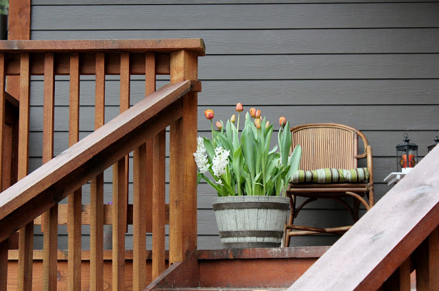 Uljepšajte vrt u rano proljeće sa tulipanima iz plastenika  Uredite Dom