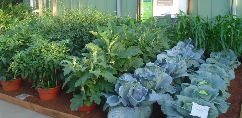 Vodič za sadnju povrća i začinskog bilja u saksijama  Uredite Dom