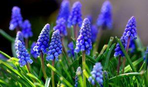 Najljepše proljećno cvijeće za vrt - Nekretnine décor - najbolje ideje za ure...
